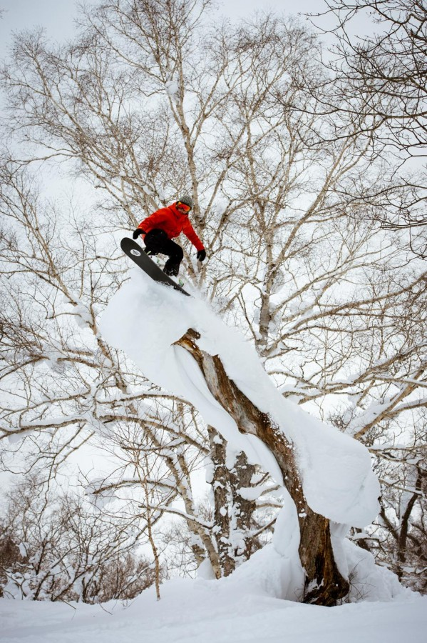 Japan Tree riding Photo: Blotto